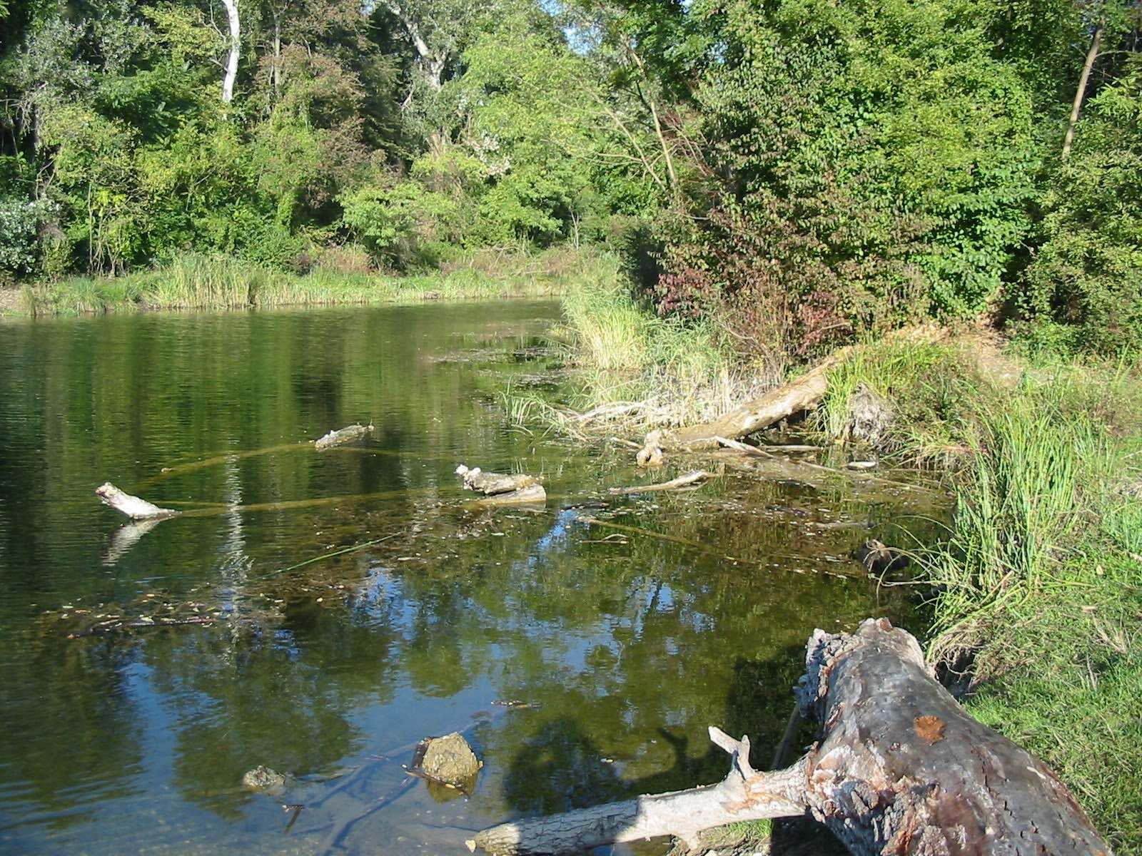 Fotos Zum Mühlwasser Lobau Lobaufischer