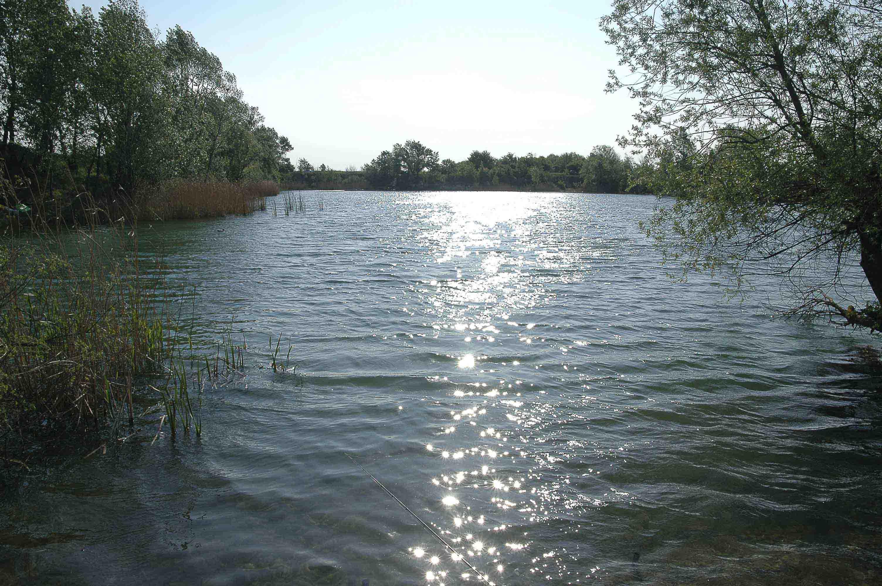 Teich Lobau 1
