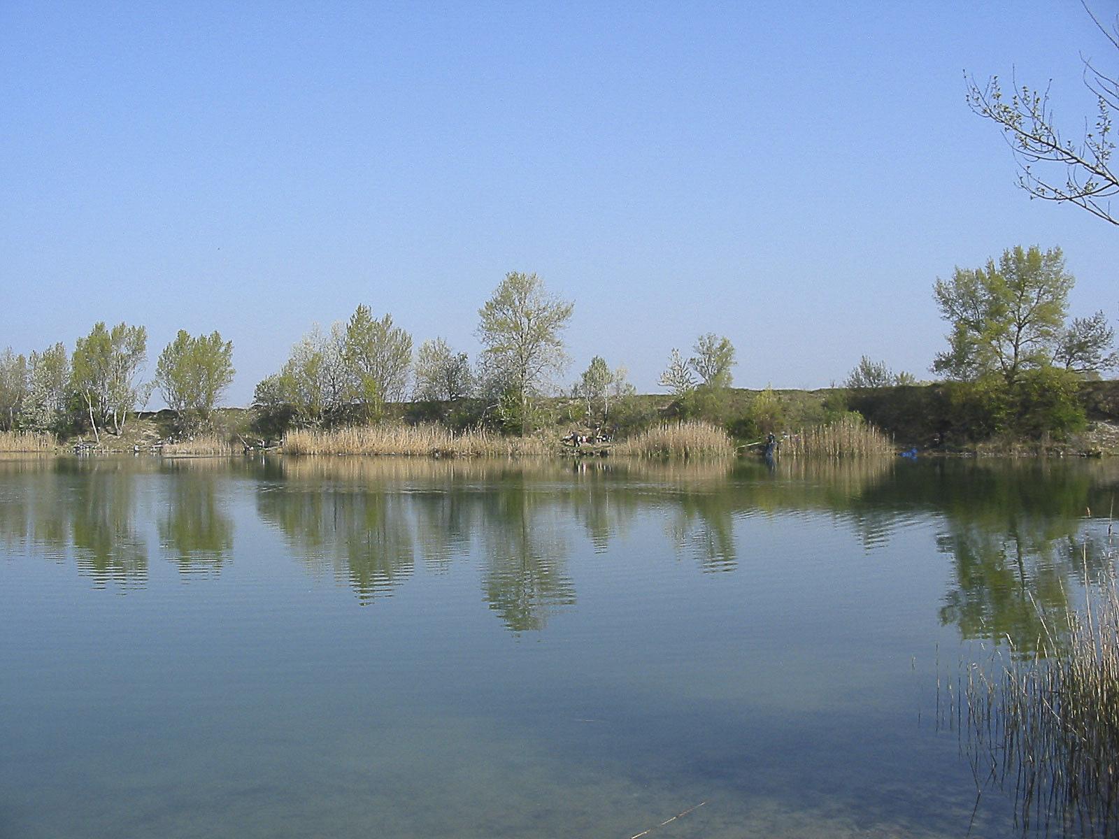 Teich Lobau 6