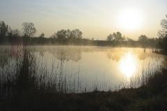 Teich Lobau 5