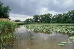 Schoenauerwasser